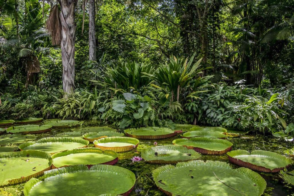 Amazonie bresilienne